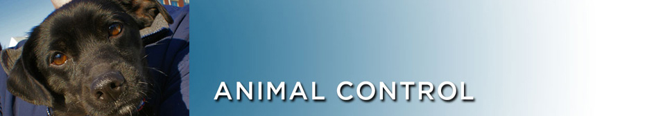~Animal Control | Licensing